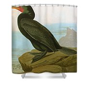 Audubon: Cormorant Shower Curtain