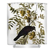 Audubon: Crow Shower Curtain