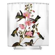 Audubon: Hummingbird Shower Curtain