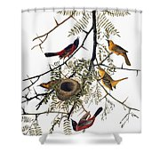 Audubon: Oriole Shower Curtain