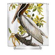 Audubon: Pelican Shower Curtain