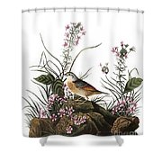Audubon: Sparrow, (1827-38) Shower Curtain