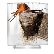 Audubon: Swallow Shower Curtain