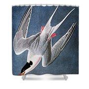 Audubon: Tern Shower Curtain
