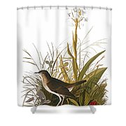 Audubon: Thrush Shower Curtain
