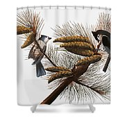 Audubon: Titmouse Shower Curtain