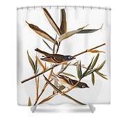 Audubon: Vireo Shower Curtain