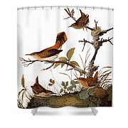 Audubon: Wren Shower Curtain