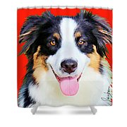 Australian Shepherd 4 Shower Curtain