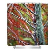Autumn Colors 25 Shower Curtain