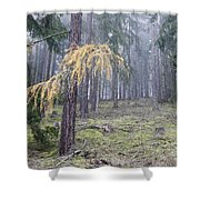 Autumn Coniferous Forest In The Morning Mist Shower Curtain