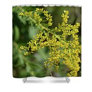 Autumn Goldenrod  Shower Curtain