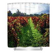 Autumn Vineyard In The Morning  Shower Curtain