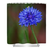 Bachelor Button Blues Lll Shower Curtain