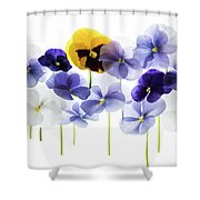 Backlit Pansies   Shower Curtain