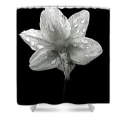 Backside Daffodil Dew Shower Curtain