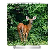 Backyard Deer Shower Curtain
