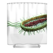 Bacteria Cross Section Shower Curtain