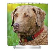 Bailee 1149 Shower Curtain