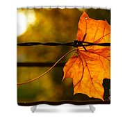 Barbed Autumn Shower Curtain