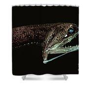 Barbeled Dragonfish Shower Curtain