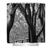 Bare Trees Shower Curtain
