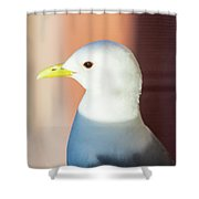Bathed In Afternoon Light Shower Curtain
