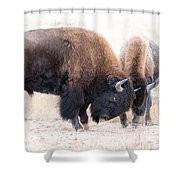 Battle Of The Bison In Rut Shower Curtain
