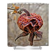 Beach Rose Hip - Rosa Rugosa Shower Curtain