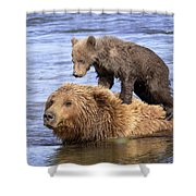 Bear Back Rider Shower Curtain