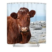 Beautiful Brown Cow On The Burren In Ireland Shower Curtain