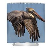 Beautiful Brown Pelican Shower Curtain