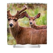 Beautiful Mule Deer Herd Shower Curtain