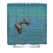 Beautiful Pelican In Flight Over The Water In Aruba Shower Curtain