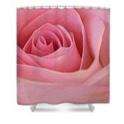 Beautiful Pink Rose Closeup Shower Curtain