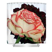 Beauty Rose Shower Curtain