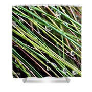 Bedazzled Blades 3 Shower Curtain