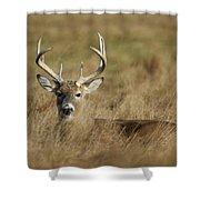 Bedded Buck Shower Curtain