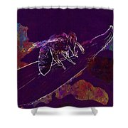 Bee Honey Bee Apis Insect Flower  Shower Curtain