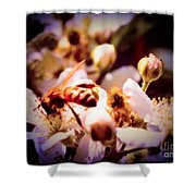 Bee On Apple Blossoms Shower Curtain
