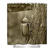 Beetle On A Log Shower Curtain