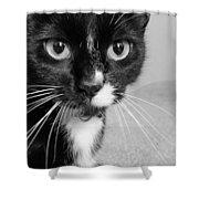 Bella The Cat Shower Curtain by Danielle Allard