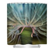 Beneath The Waves Shower Curtain by Jack Zulli