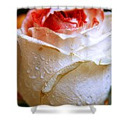Bicolor Rose Shower Curtain