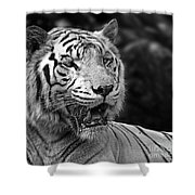 Big Cats 4 Shower Curtain