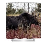 Big Mama Moose Shower Curtain