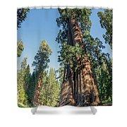 Big Tree Trail - Sequoia National Park - California Shower Curtain