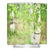 Birch In Spring Shower Curtain