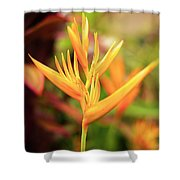 Bird Of Paradise Plant In The Garden. Shower Curtain
