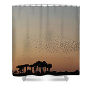 Birds In The Sun Shower Curtain